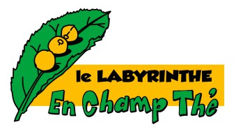 labyrinthe en champ thé